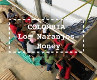 COLOMBIA -Los Naranjos- Honey